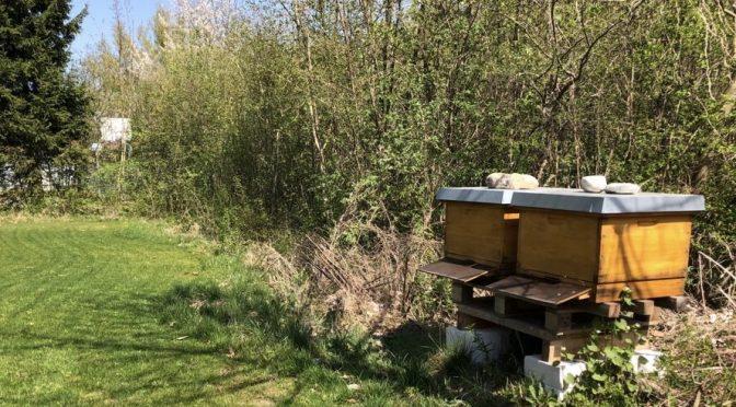 Bienen beim RCLK
